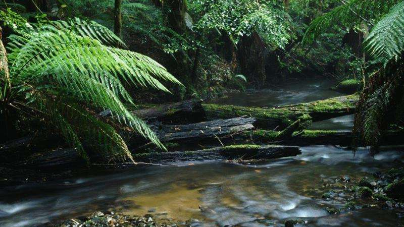 Victoria's forests worth more as national park than timber