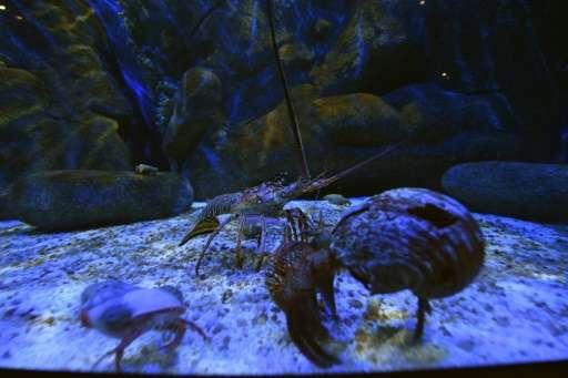 View of different marine species at the AguaRio aquarium in Rio de Janeiro