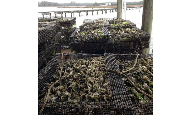 Virginia continues to lead in clam and oyster aquaculture