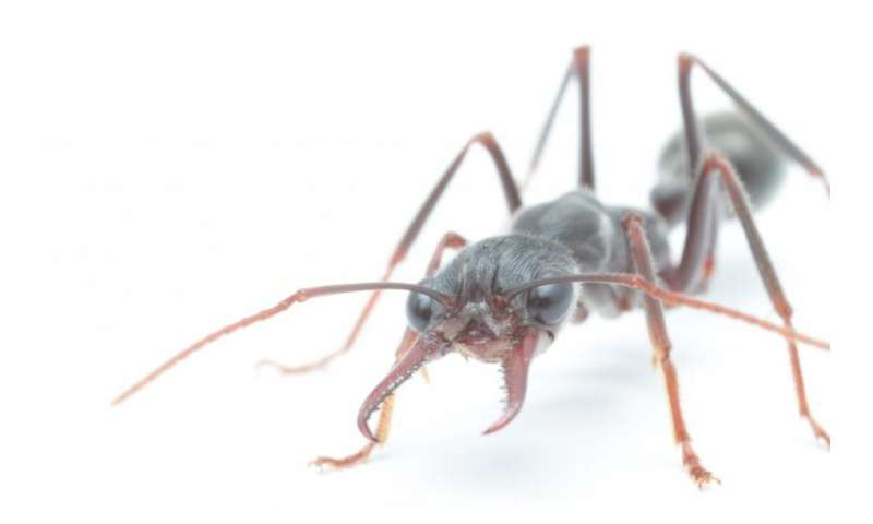 Vision assists ants to stabilise their head – until darkness falls