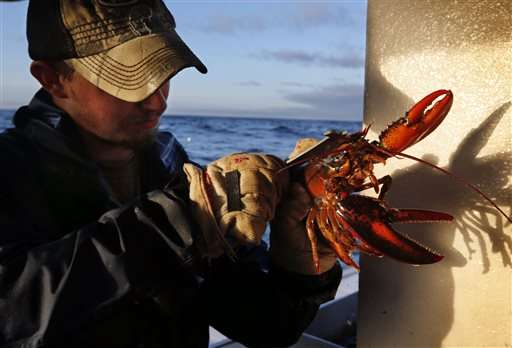 Warm ocean could mean early boom in 2016 lobster catch