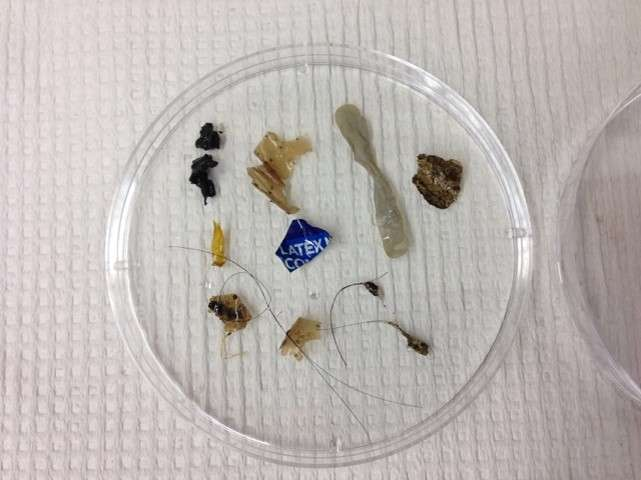Wastewater treatment plants significant source of microplastics in rivers