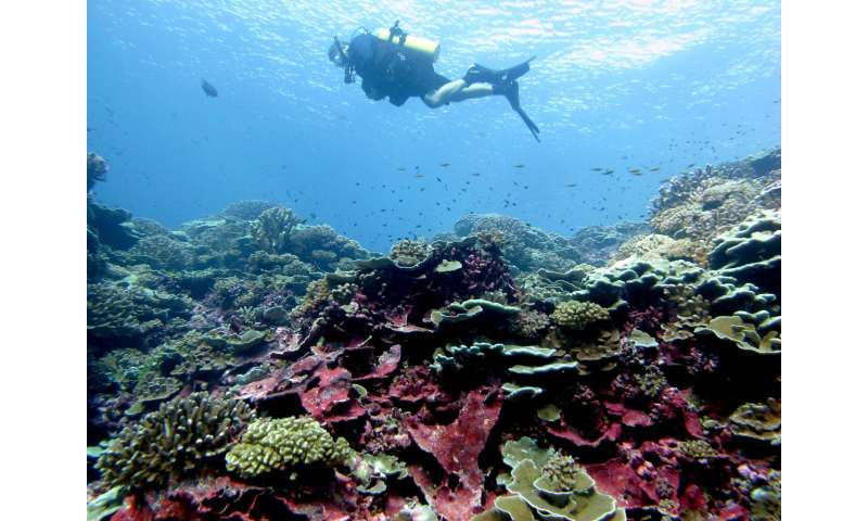 We share a molecular armor with coral reefs