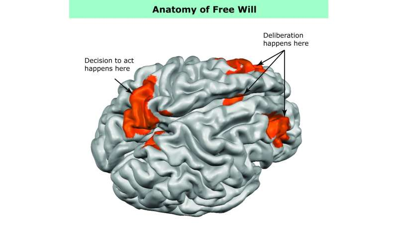 What free will looks like in the brain