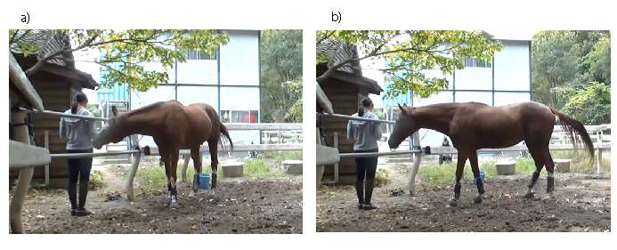 When horses are in trouble they ask humans for help