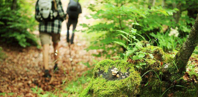 Why a walk in the woods really does help your body and your soul