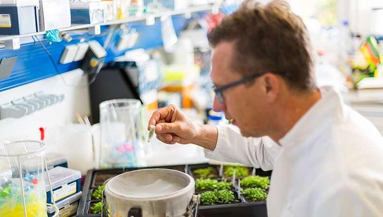 Por qué la edición del genoma ofrece una forma específica de mejorar los cultivos