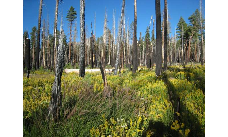Wildfire management vs. fire suppression benefits forest and watershed