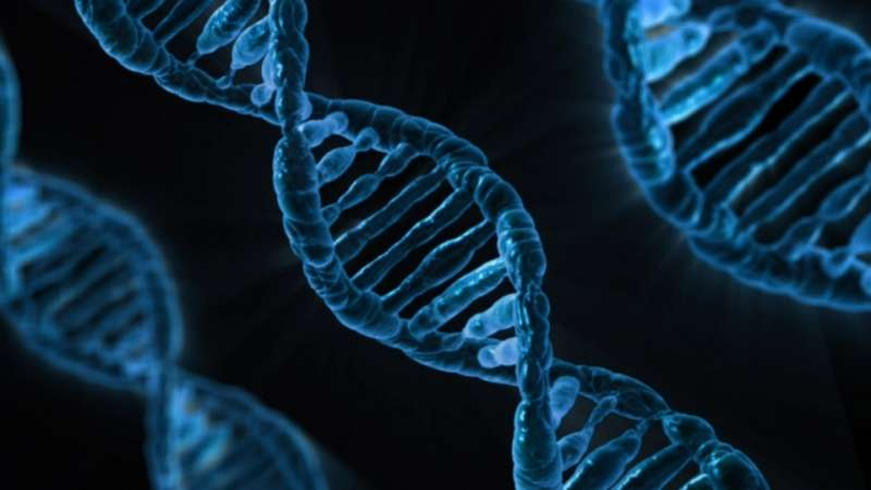 World-wide study reveals new genes for heart function