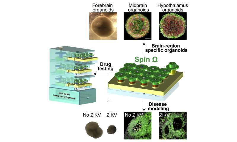Zika is test case for brain organoid mini-reactors