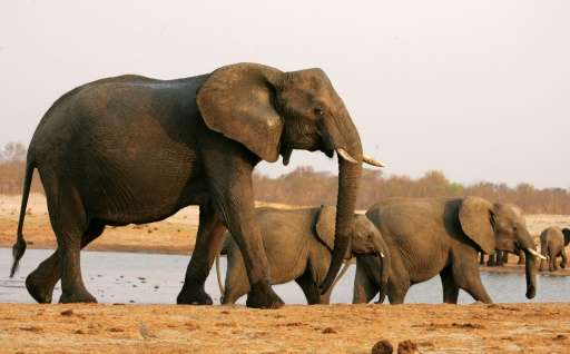 Zimbabwe has in recent years exported elephants in a bid to raise funds and cut the ballooning population