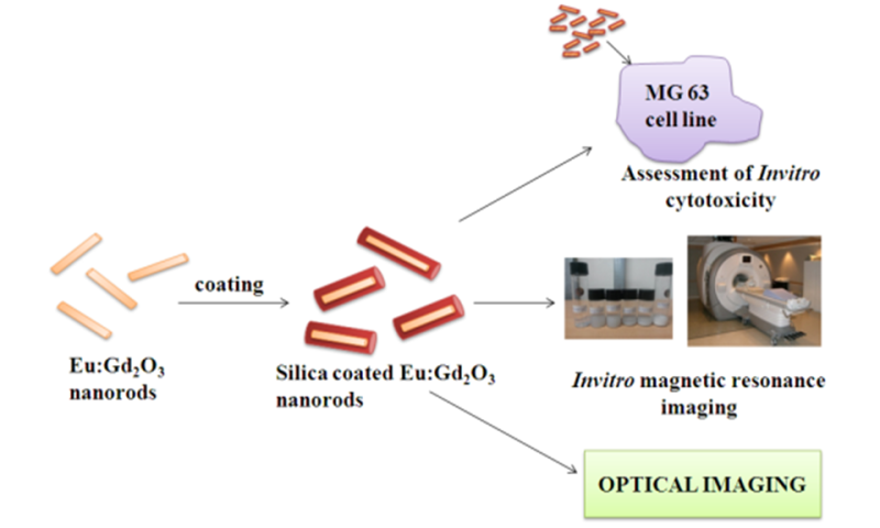 Researchers developed nanoparticle based contrast agent for dual modal imaging of cancer