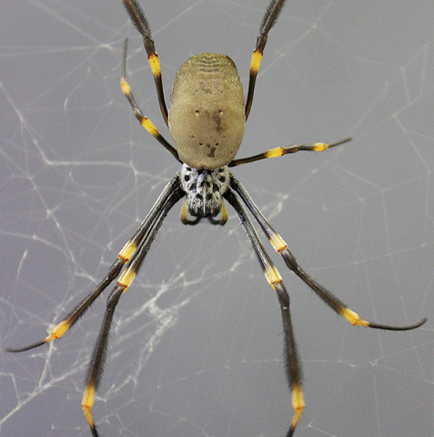 3-D printing spiders