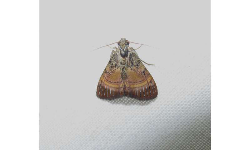 A colorful yet little known snout moth genus from China with 5 new species