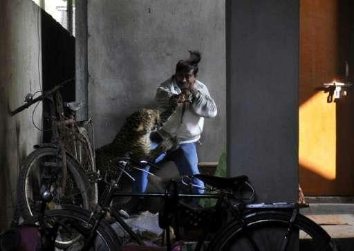 A leopard attacks and wounds Indian labourer Pintu Dey in Guwahati