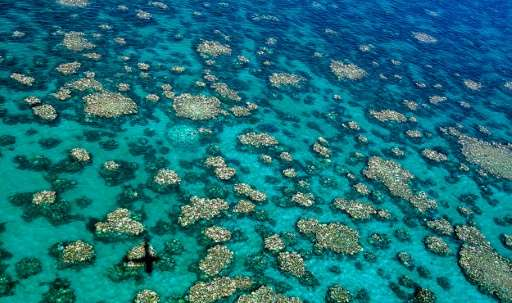 An aerial view of bleaching in the Cairns-Townsville region of Australia's Great Barrier Reef