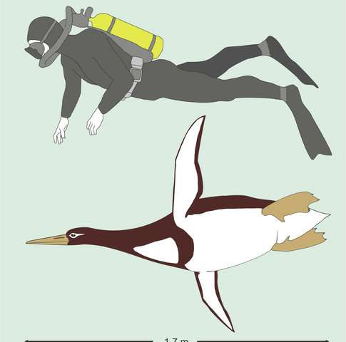 Ancient penguin was as big as a (human) Pittsburgh Penguin