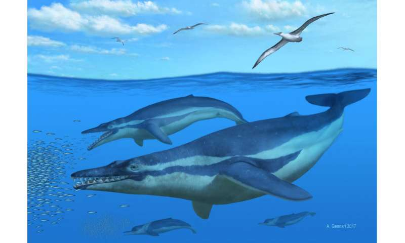 Ancient South Carolina whale yields secrets to filter feeding's origins