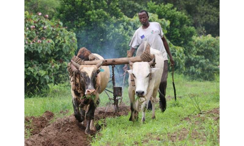 """""""Antelope perfume"""" keeps flies away from cows"""