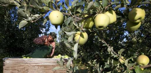 A robot that picks apples? Replacing humans worries some