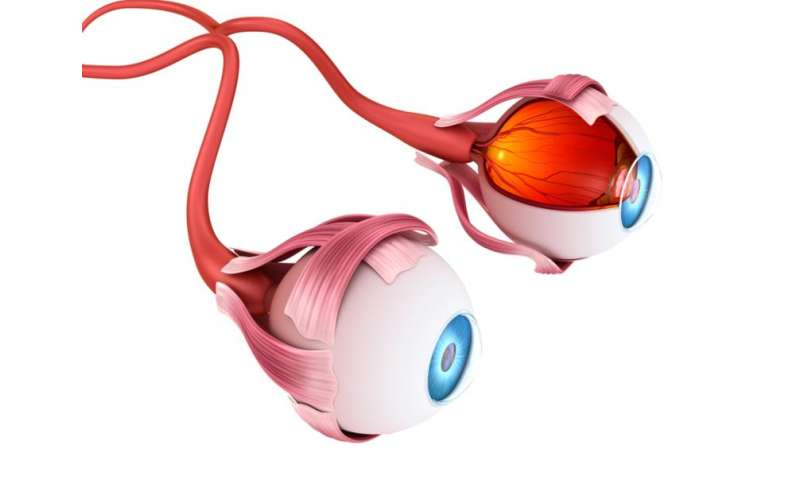 Artificial vision: what people with bionic eyes see