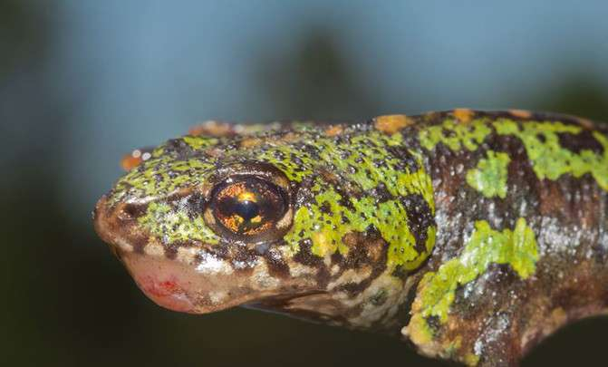 A virus lethal to amphibians is spreading across Portugal