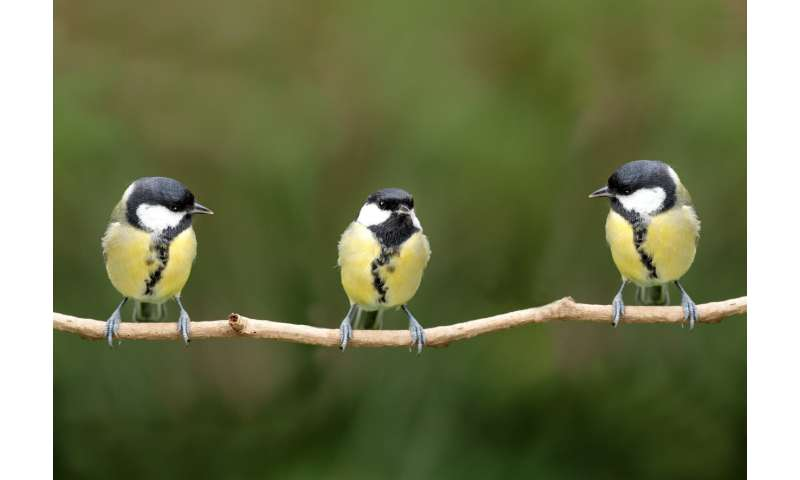 Birds learn from each other's 'disgust,' enabling insects to evolve bright colors