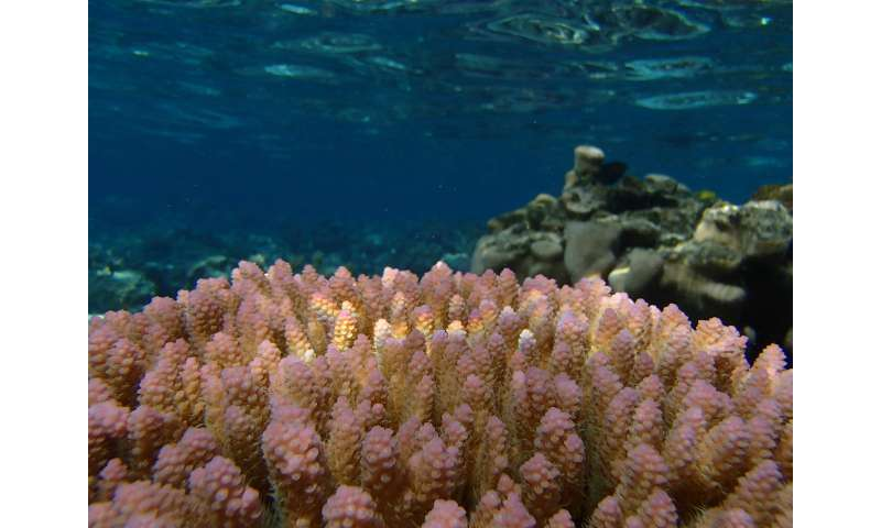Can corals adapt to climate change?