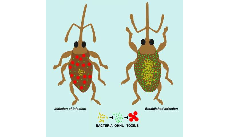 Controlling bacteria's necessary evil