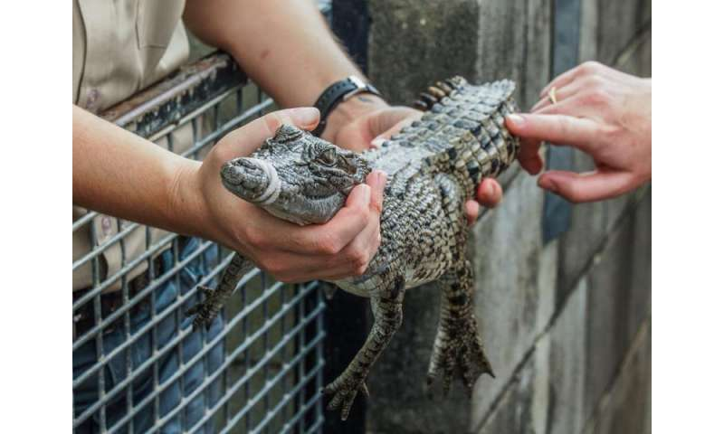 Croc research on gambling habits gets an Ig Nobel