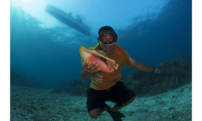Declining queen conch populations are fragmented and that's changing the conservation game