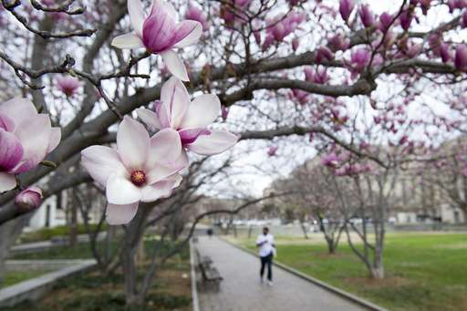 Early bird special: Spring pops up super early in much of US (Update)