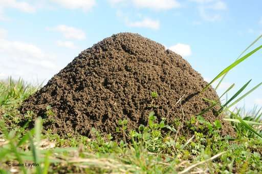 Efforts aim to limit the spread of fire ants in the US