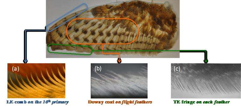 Engineer looks to owl wings for bio-inspired ideas for quieter aircraft, wind turbines