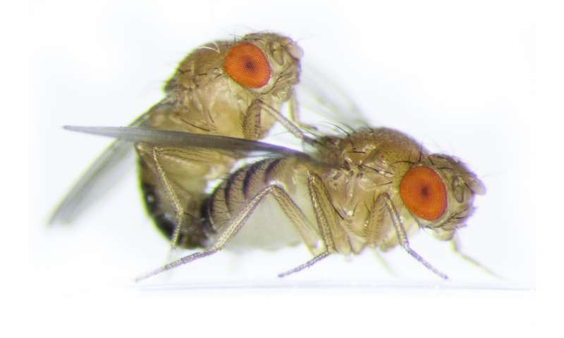 Family break-ups lead to domestic violence in fruit fly relationships