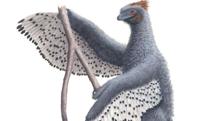 Feathered dinosaurs were even fluffier than we thought