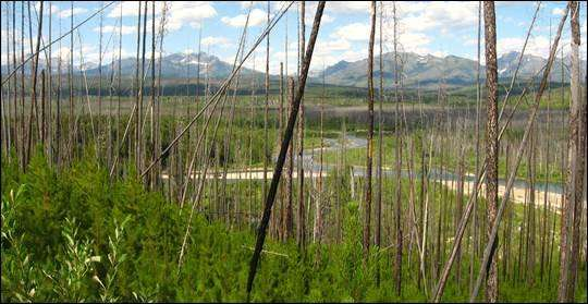 Forest resilience declines in face of wildfires, climate change