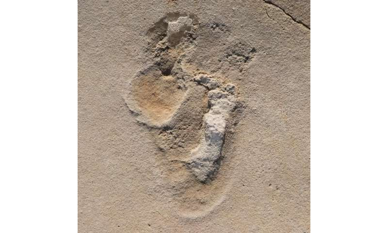 Fossil footprints challenge established theories of human evolution