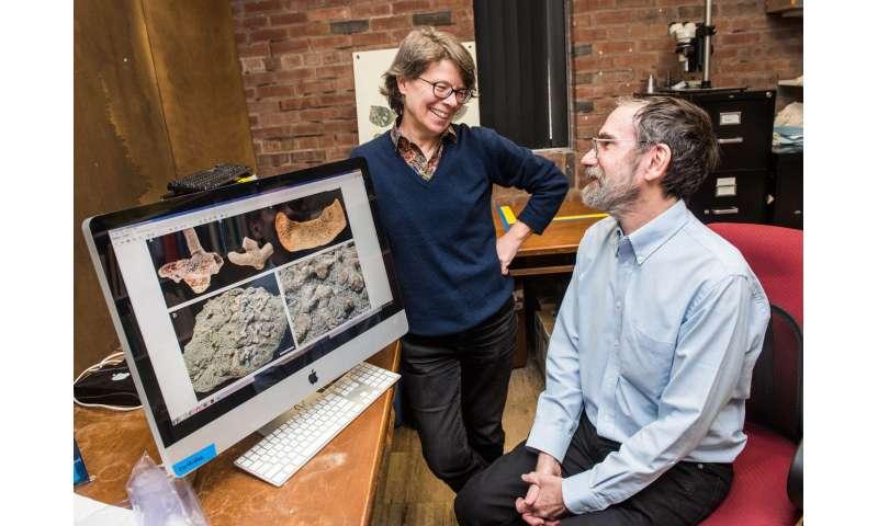 Fossil that fills missing evolutionary link named after UChicago professors