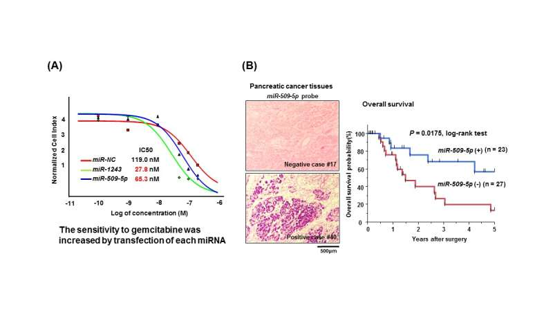 Gene-regulatory factors shown to improve pancreatic cancer response to chemotherapy