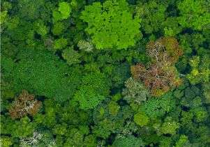 High-tech rainforest map brings climate and conservation efforts into sharp relief