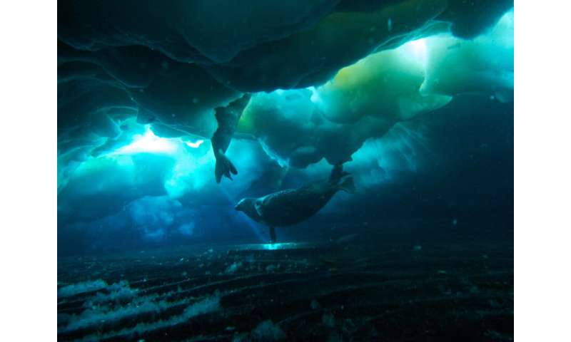 How climate change is affecting polar fish at the tip of a warming world