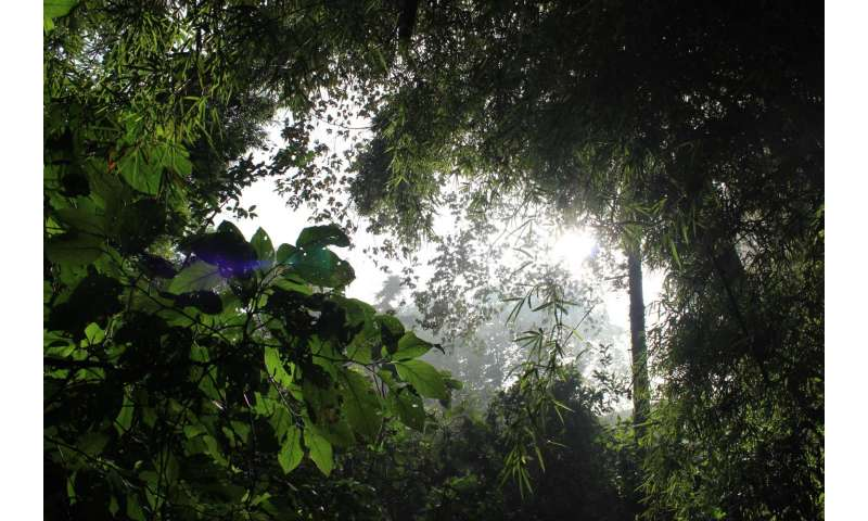 Humans have been altering tropical forests for at least 45,000 years
