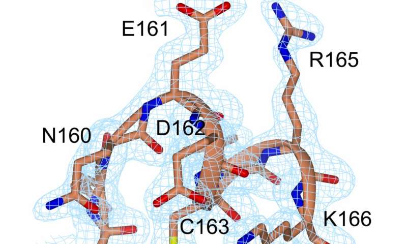Insights into closed enzymes