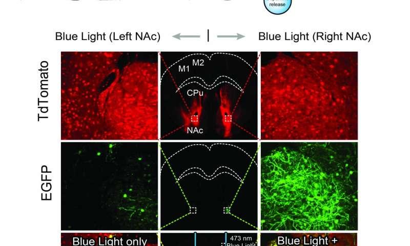 iTango: New technique studies neuromodulation in real time