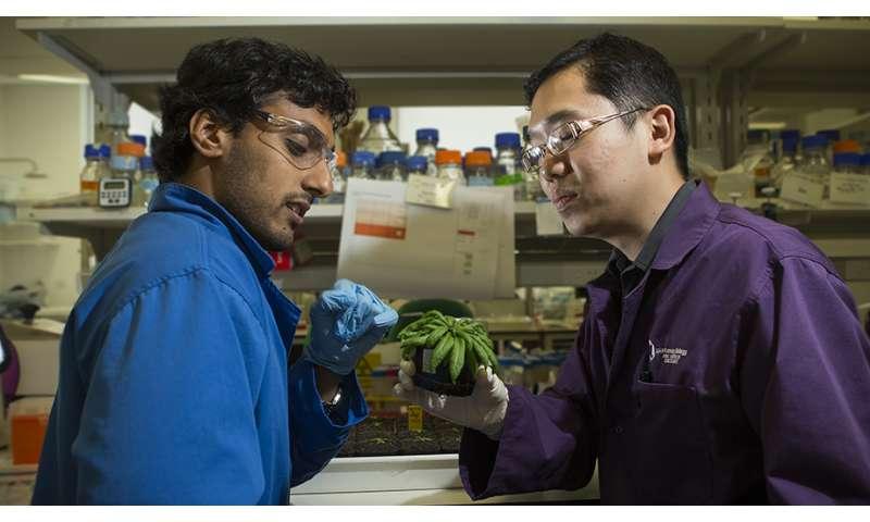 Lending plants a hand to survive drought