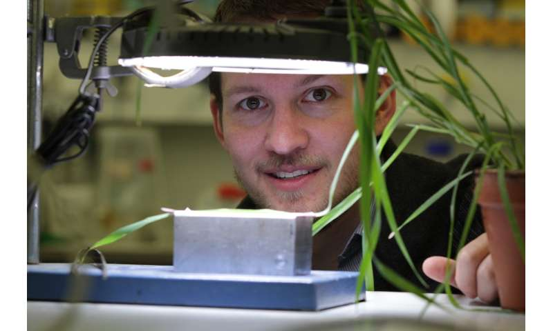 Las plantas de color verde claro ahorran nitrógeno sin sacrificar la eficiencia fotosintética.