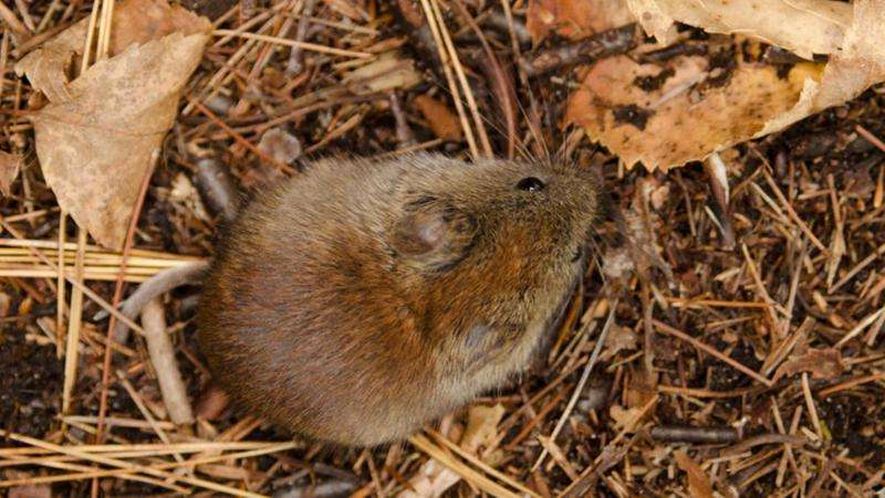 Long-term study links tree seeds, rodent population fluctuations