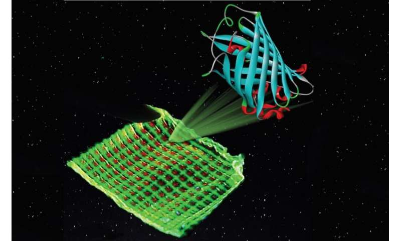 Luminescent proteins provide colour to ecological and cheap Bio-displays