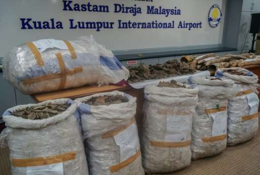 Malaysian authorities seized six sacks containing the scales of the pangolin, a critically endangered creature that is the world